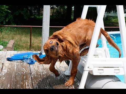 TRY NOT TO LAUGH OR GRIN with Funny Dog Videos || New HD