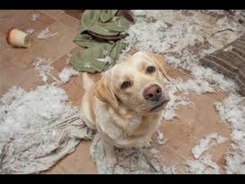 Funny Guilty Dogs Compilation Funniest Dog Videos