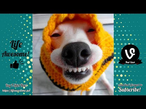 TRY NOT TO LAUGH – Funny Videos Fails 2019 – Dogs Are So Dumb