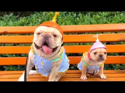 Baby Dogs Cute And Funny Dog Videos Compilation 2019 – Funny Dogs Compilation | TRY NOT TO LAUGH