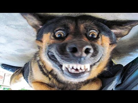 😁 Funniest 🐶 Dogs and 😻 Cats – Awesome Funny Pet Animals' Life Videos 😇