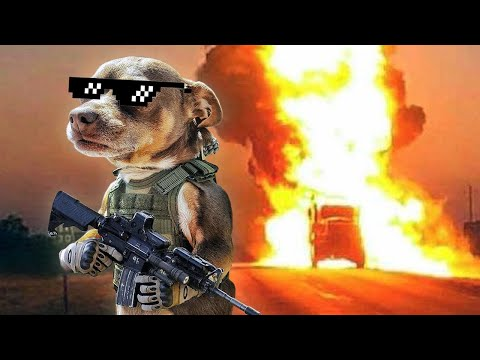 DANK DOG MEMES COMPILATION W/FUNNY VIDEOS 2019