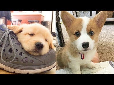 Cutest Baby Dogs Ever – Cute And Funny Dog Videos Compilation 2019 | Puppies TV