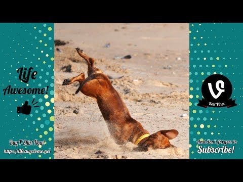 Dogs and Cat Funny Moments | Funny Animals Compilation 2019 🤣 TRY NOT TO LAUGH 🤣