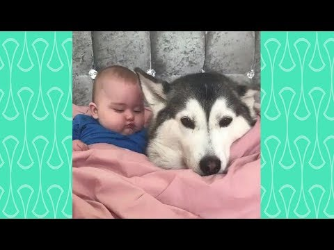 Funny Dog protects owner Compilation Weekly  2019  – Loyal protection Dog Videos