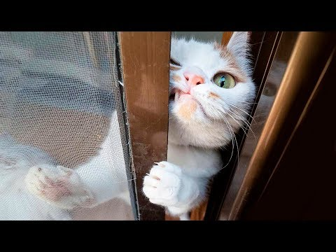 😂  Funniest 😻 Cats and 🐶 Dogs – Awesome Funny Pet Animals' Life Videos 😇