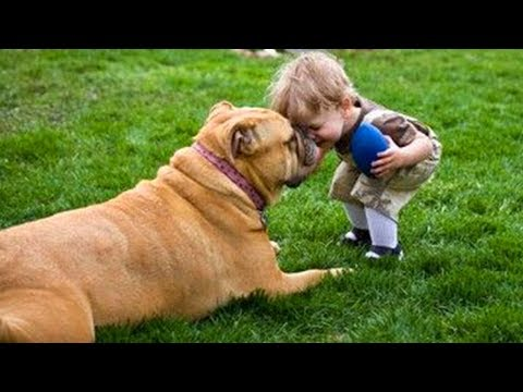 Funny Dogs and Babies are Best Friends 🐶👶 Cute Babies and Pets Video Compilation