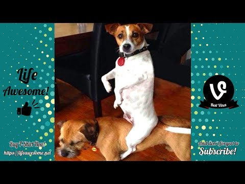 Try Not To Laugh – Funny Animals Video Fails 2019 – Why Are Dogs So Weird