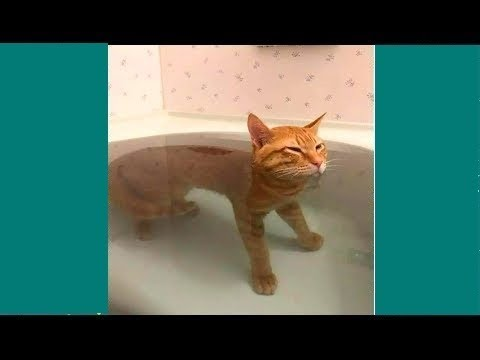 Try Not To Laugh Watching Funny Animals Compilation – Funniest Animals Vines 2019