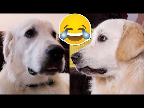 Cute Dog Makes Funny Faces COMPILATION