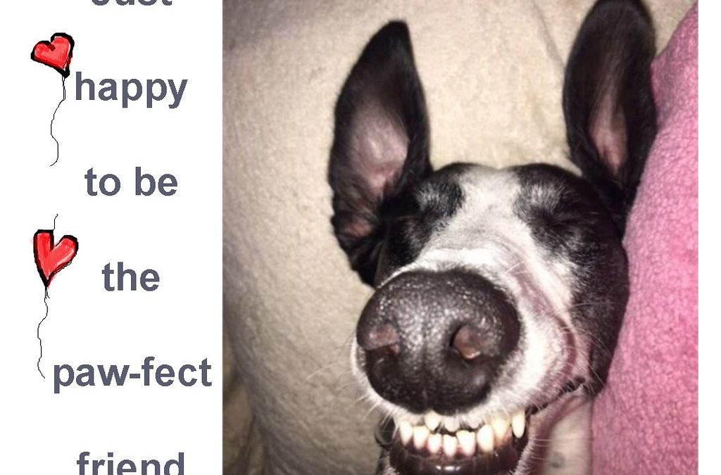Tips On How To Raise A Happy Dog