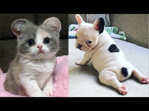 Cutest Baby Dog and Cat – Cute and Funny Dog Videos Compilation #1