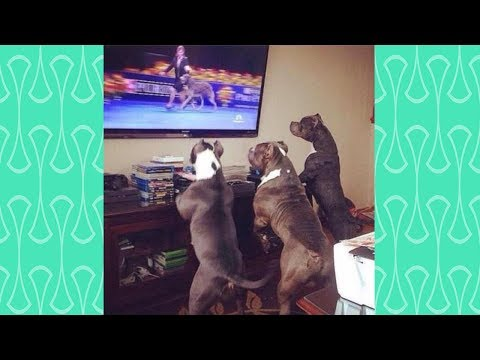 BEST OF CUTE DOG's Reaction watching TV   Funniest Dogs Video 2019