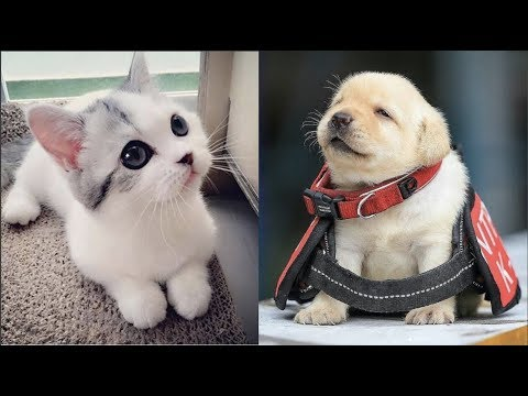 Cutest Baby Dog and Cat – Cute and Funny Dog Videos Compilation #2