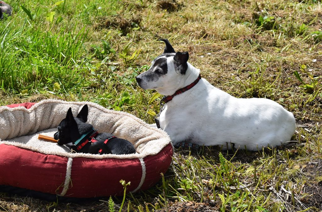 Anyone Can Become Knowledgeable About Dogs With These Easy Tips