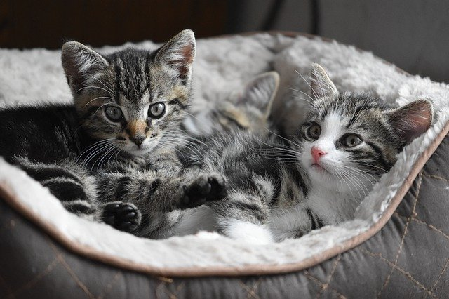 Seven Tips For Kitty Cat Care