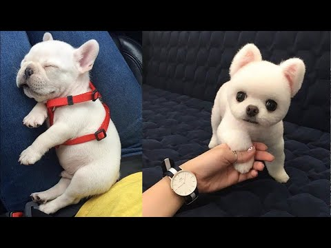 Baby Dogs – Cute and Funny Dog Videos Compilation #6 | Aww Animals