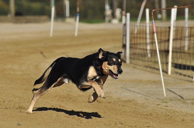 Training Your Dog Made Easy – Read This Great Advice!