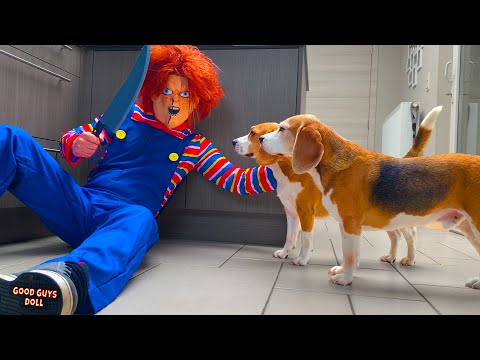 Dogs Vs Child's Play Chucky Prank : Funny Dogs Louie and Marie