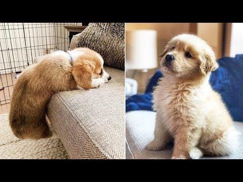 Funny Cats and Dogs Videos Compilation (2019) Perros y Gatos Recopilación