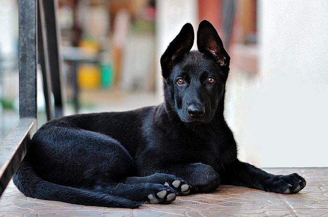 Effective And Permanent Tips For Training Your Dog