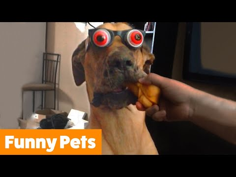Try Not To Laugh | Funny Pet Videos