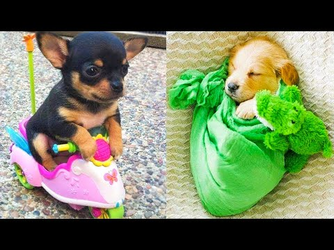 Baby Dogs – Cute and Funny Dog Videos Compilation #17 | Aww Animals