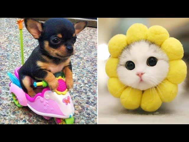Baby Animals 🔴 Funny Cats and Dogs Videos Compilation (2019) Perros y Gatos Recopilación #10