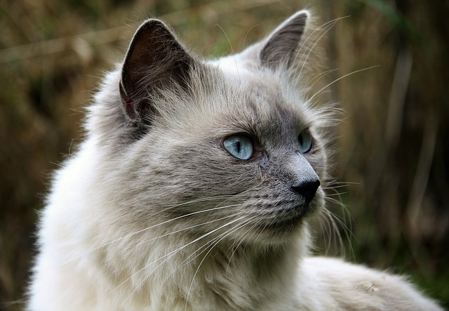 Want To Know More About Cats? You've Come To The Right Place!