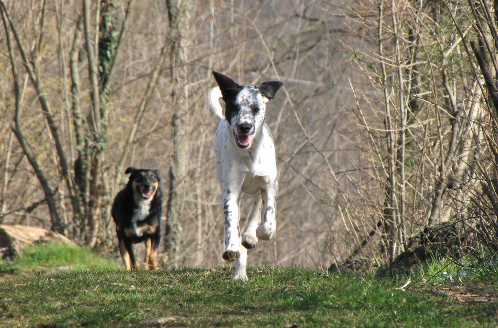 Wonderful Ways To Enrich Your Dog's Life