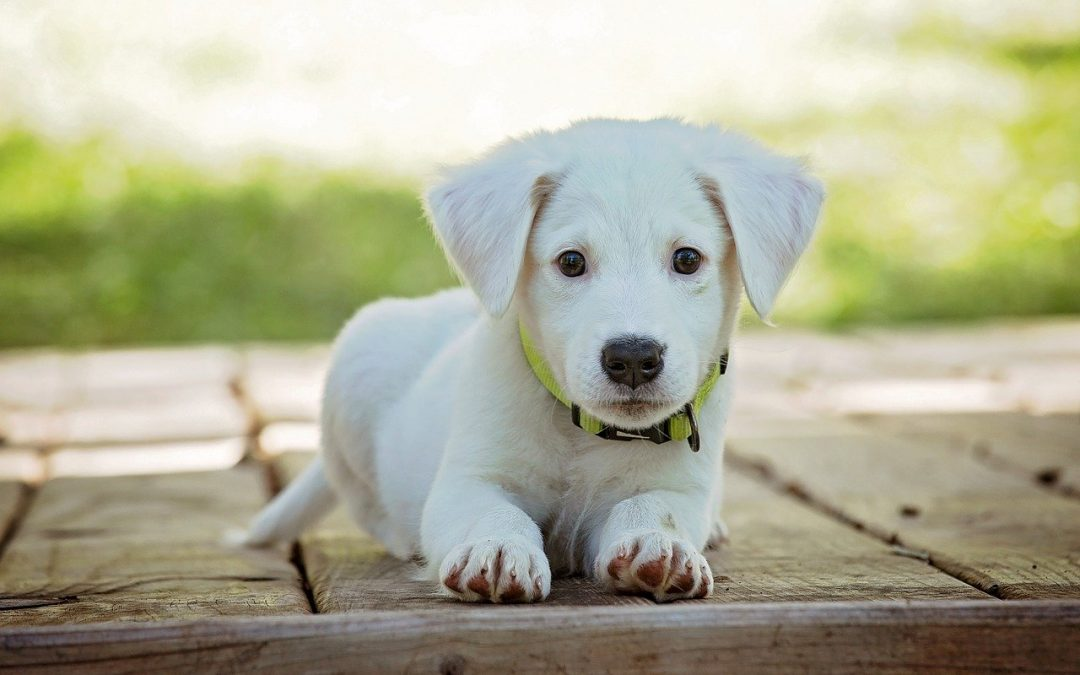 Top Tips For Caring For Your Dogs