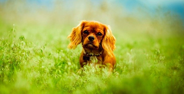 Help Your Pooch Learn To Behave And Follow Directions