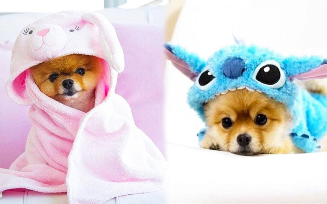 Baby Dogs – Cute and Funny Dog Videos Compilation #19 | Aww Animals