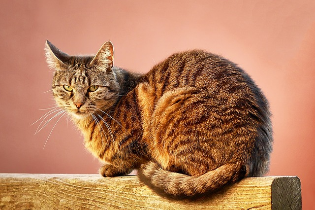 Tips To Help A Novice Cat Owner
