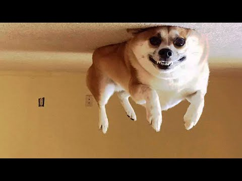 😂 Awesome Funny 🐶 Dogs And Cats 😸 –  Funniest And Cute Pet Videos