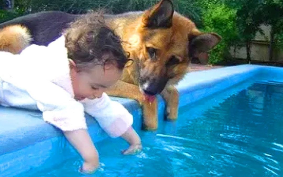 Funny Videos Animals  – Try not to laugh – Dog 2020