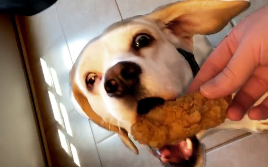 Cute and Funny Dog Videos to Start Your July 4th Weekend! 🐶