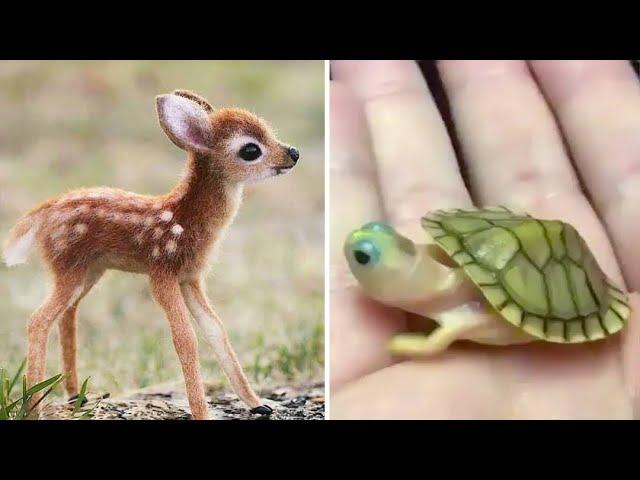 Baby Animals 🔴 Funny Cats and Dogs Videos Compilation (2020) Perros y Gatos Recopilación #27
