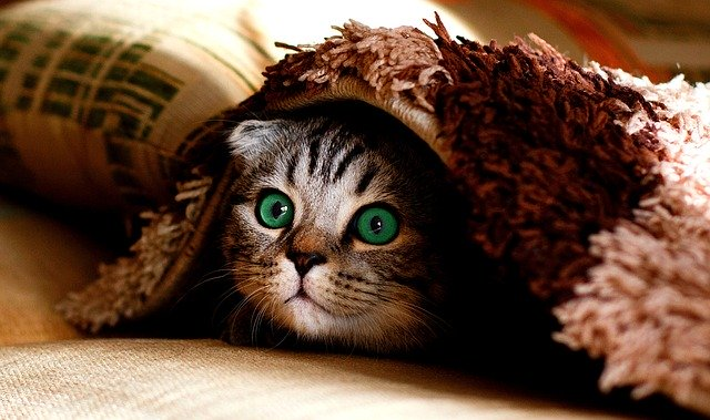 Wondering How To Keep Your Cat Happy? Read These Tips Today!