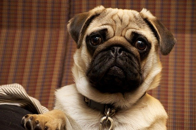 Tips And Tricks To Living With A Well-Behaved Dog