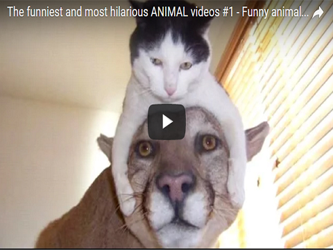 The funniest and most hilarious ANIMAL videos #1
