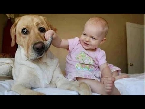 Funny Videos – Babies Laughing at Dogs – Cute dog & baby compilation