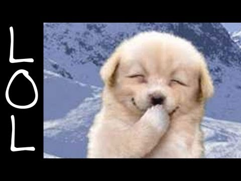 Funny Dogs – World's Funniest Dog Video Ever!