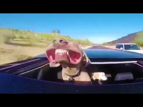 Funny Animals ► Crazy Dogs ► Animal Videos That Make You Laugh ► Animals TV