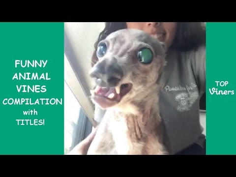 Try Not To Laugh Challenge – Funny Animals Videos Compilation | Best Pets, Cats and Dogs Vines