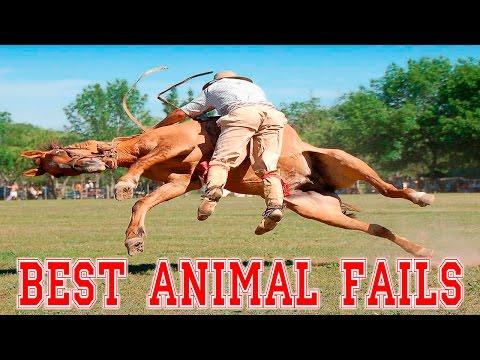 BEST ANIMAL FAILS – Ultimate Animal Fails Compilation 2016 – Animal Fail Videos