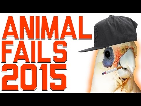 Funniest Animal Fails Compilation 2015 | FailArmy