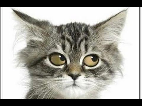 Insane Funny Cats interact with Wild Animals – Funny Cat Videos, Funny Kitty Cats, Funny Pets