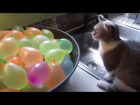 Funny Cats Eating Compilation May 2015
