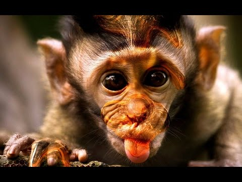Funny Monkeys | ZOO Animals Compilation